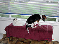 Name: res003.jpg Views: 61 Size: 211.7 KB Description: Momma's home!