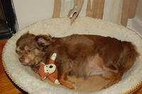 Name: DSC_0518.jpg
