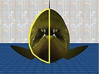 Name: FishView-FishFront.jpg Views: 86 Size: 59.8 KB Description: Not Fat!!