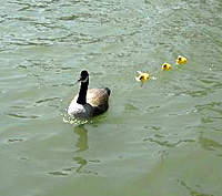 Name: LLake 007_NEW.jpg