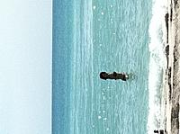 Name: eve going for a swim at southbeach.jpg