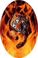 Name: Tiger Flames.jpg Views: 51 Size: 84.3 KB Description: Original