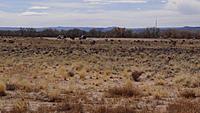 Name: DSC04057.jpg Views: 48 Size: 245.6 KB Description: The field looking towards the south-west.