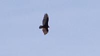Name: DSC06758.jpg