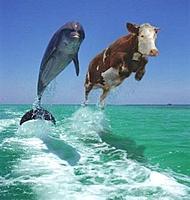 Name: flipper-cow-thumb-stress02.jpg Views: 586 Size: 8.4 KB Description: