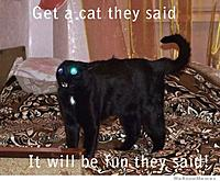 Name: get-a-cat-they-said.jpg