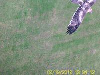 Name: falcon2-02.jpg Views: 199 Size: 48.9 KB Description: