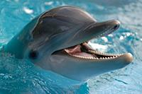 Name: 424-bottlenoseddolphin.jpg