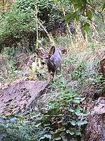Name: 0F140690-4E2D-4655-A974-E4D2AF6E7090.jpg