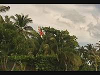 Name: RedKite Maiden a.wmv_000038171.jpg Views: 156 Size: 35.4 KB Description: