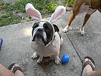 Name: easter 2011 003.jpg