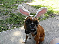 Name: easter 2011 002.jpg