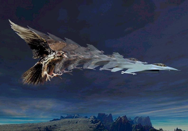 Name: falcon.jpg Views: 1,649 Size: 45.5 KB Description: