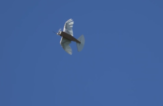 PigeonBot in flight