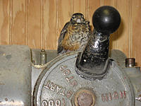 Name: IMG_1415.jpg