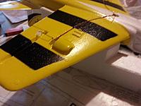 Name: Wing_bumps.jpg