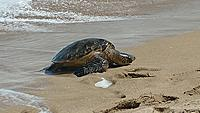 Name: 0525181023a.jpg
