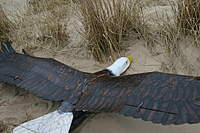Name: 051.jpg Views: 218 Size: 106.4 KB Description: Eagle Glider