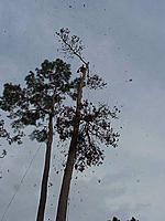 Name: tree6.jpg Views: 80 Size: 40.7 KB Description: