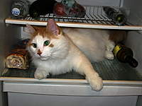 Name: IMG_0052-s.jpg