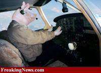Name: Pig-Pilot--16153.jpg Views: 159 Size: 38.0 KB Description: