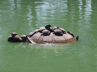 Name: Picture 015.jpg