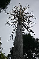 Name: IMG_4192.jpg