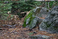 Name: IMG_4236.jpg