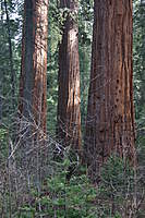 Name: IMG_4240.jpg