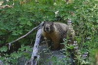 Name: IMG_6932.jpg
