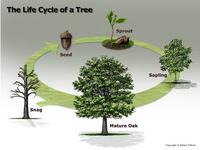 Name: tree build log.jpg Views: 123 Size: 61.1 KB Description: