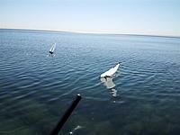Name: 20120429_100401 (Medium).jpg