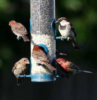 Name: FullHouse-1.jpg