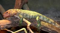 Name: Lizard-1.jpg Views: 291 Size: 91.1 KB Description: