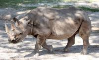 Name: Rhino-1.jpg Views: 270 Size: 108.5 KB Description: