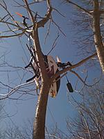 Name: tree.jpg Views: 113 Size: 62.6 KB Description: