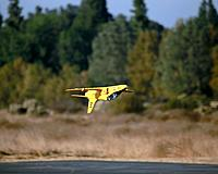 Name: NOVEMBER MULTI FLIGHTS 11-26-17 086.jpg