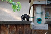 Name: bird feeder 005.jpg Views: 166 Size: 328.0 KB Description: