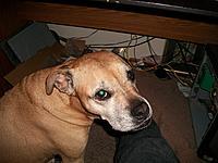 Name: 100_2705.jpg Views: 38 Size: 254.7 KB Description: one guilty dog