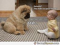Name: dog-made-poop-outside-funny-baby.jpg Views: 170 Size: 62.4 KB Description: