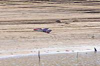 Name: DSCF7887-1.jpg Views: 97 Size: 107.7 KB Description: Coming in for a landing.