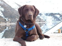 Name: DSCF0354.jpg Views: 190 Size: 83.1 KB Description: my dog OLA