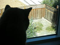 Name: P4030010.jpg Views: 222 Size: 102.4 KB Description: Momo on duty, some suspicious activity in the yard ...