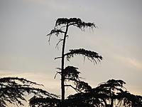 Name: 9-22-12 004.jpg Views: 34 Size: 151.2 KB Description: tree across my house