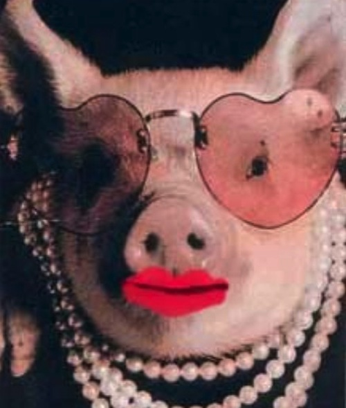 Name: pig-wearing-lipstick.jpg Views: 844 Size: 62.7 KB Description: I love you, Farmer Futz!
