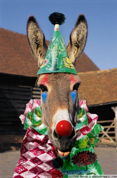 Name: donkey clown.jpg