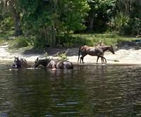 Name: horses 2.jpg Views: 170 Size: 87.7 KB Description: