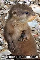 Name: otter.jpg Views: 107 Size: 65.7 KB Description: