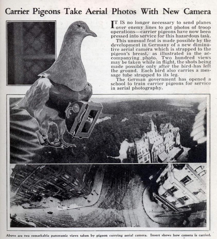 Name: pigeon_cam.jpg Views: 360 Size: 139.8 KB Description:
