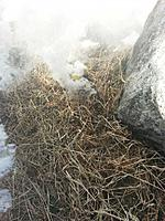 Name: batt burning.jpg Views: 257 Size: 75.3 KB Description: The snow is white too, but the smoke has the distinctive billowing. The grass was on fire when I first saw it!